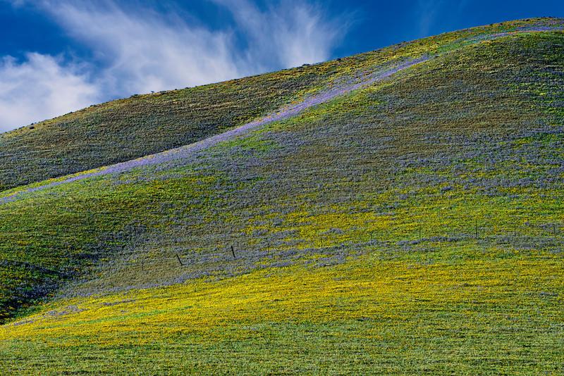 Gorman_Wildflowers_Stripes_2014Apr30_0022