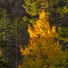First_Light_Aspen-CU-Sierra_Fall_2015Oct20_0189