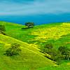 CaliforniaGoldHillsides_LDG7468_1803