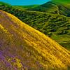 CA46GradeWildflowerBonanza-Moonrise