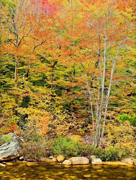 FallColorRiverPanorama_Take2UsingOnOne