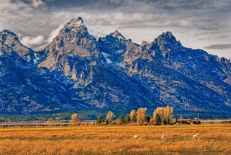 Grand Teton with Pronghorn Antelope