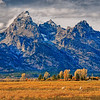 Grand Teton with Pronghorn Antelope