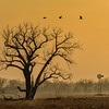 Foggy_Dawn-CranesNE_2014Mar19_2440