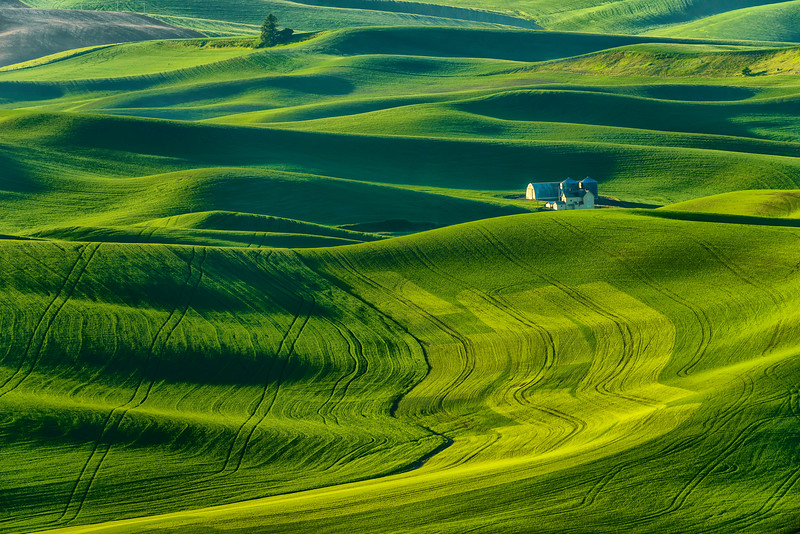 Green Paloose from Steptoe Butte_Jun112013_2704