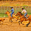 Indian Rodeo Action