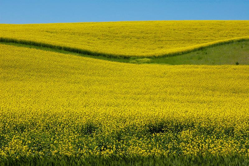 Colfax Grain Curves