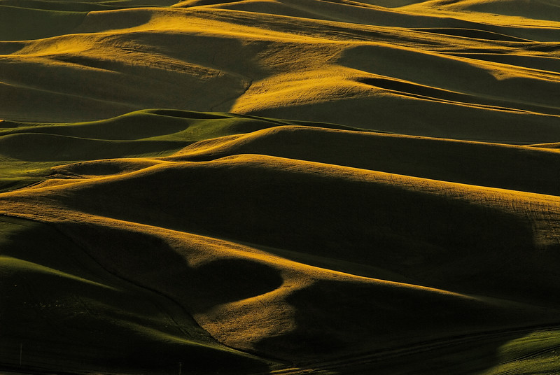 Green and Gold Waves of Grain