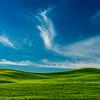 Green Palouse-Blue Sky_Jun112013_2847