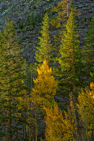 First_Light_Aspen_Medium_Sierra_Fall_2015Oct20_0198