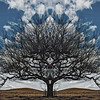 Father_Tree
