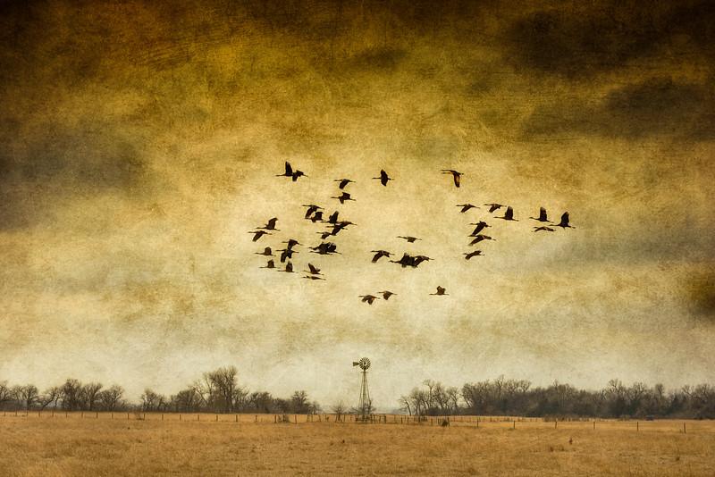 Crane Flight Over Windmill Texturized-CranesNE_2014Mar18_2454