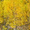 Full-On-Aspen-Sierra_Fall_2015Oct20_0546