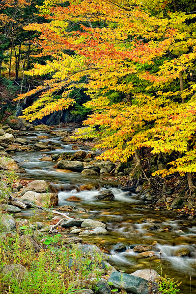 Fall_Color_Stream_LDG6438