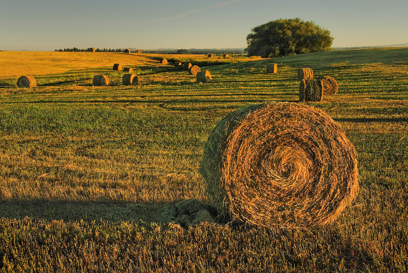 Hay Rolls in Eastern Washington