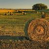 Hay Rolls in Eastern Washington