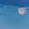 Fly_Me-To_The_Moon-CranesNE_Mar182014_0620