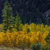 Backlit_Aspen_Panorama1