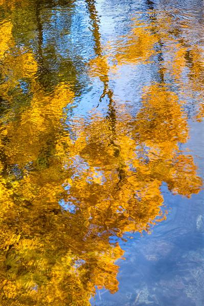 Aspen Leaf Impressionist