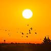Into_The_Sunrise-CraneNE_2014Mar20_4001