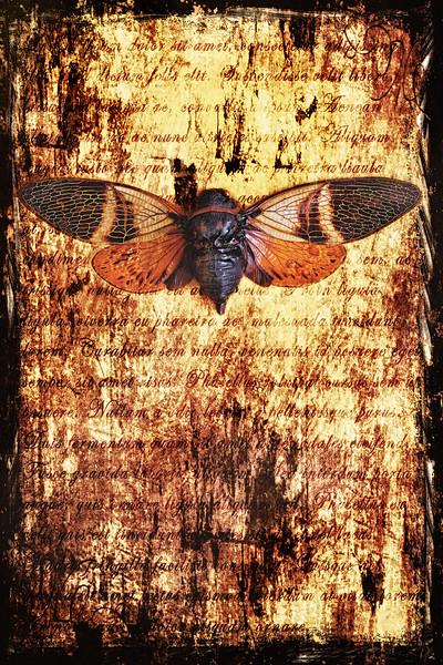 CicadaTexture
