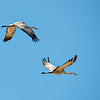 Cranes_From_Below-CranesNE_2014Mar20_5134