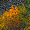 First_Light_Golden_Aspen-Sierra_Fall_2015Oct20_0193