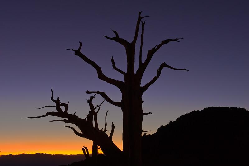 Last Light on Bristlecone Mountain