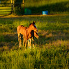 Colts-Palouse_Jun102013_0231