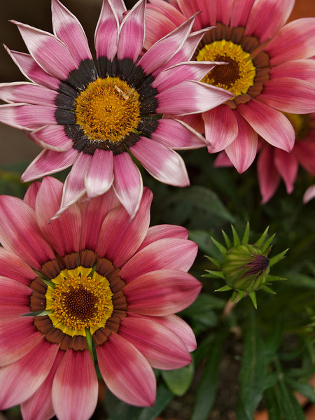 Week 20 - pretty flowers?