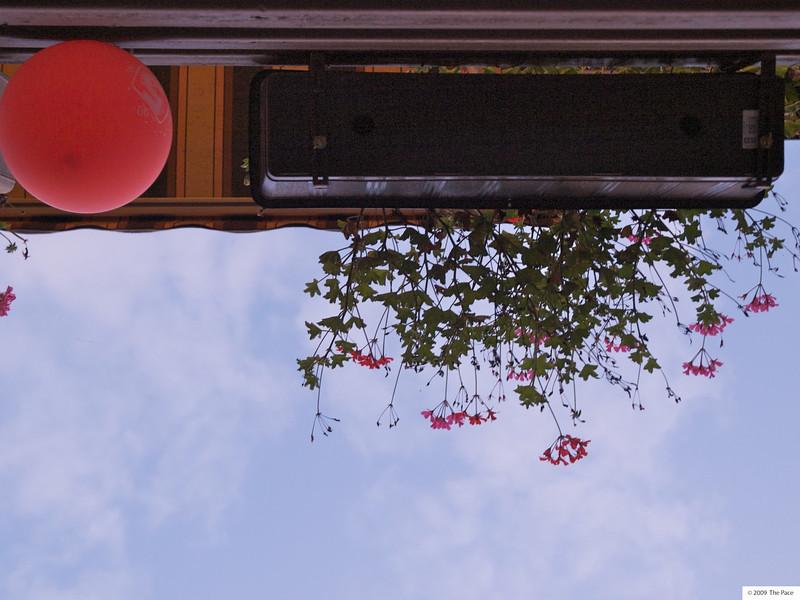 Week 34 - Hanging basket