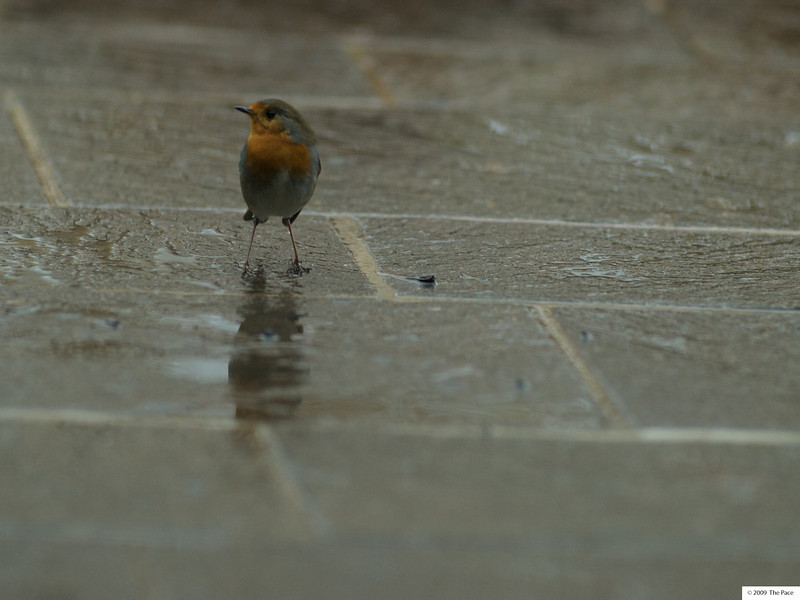 Week 46 - Robin 2 (zuiko 180/2)