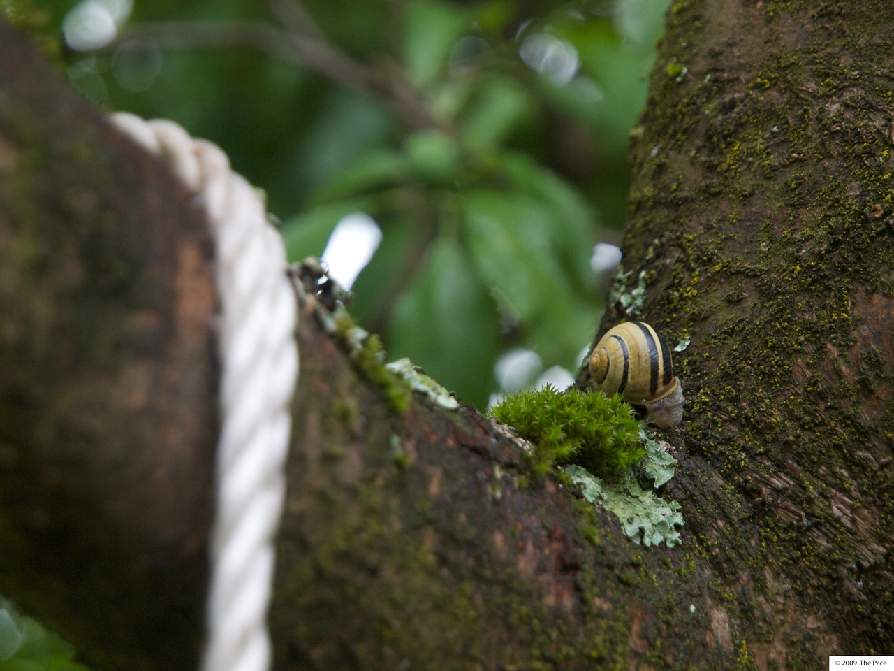 Week 24 - Like I said before the snails have headed to the trees
