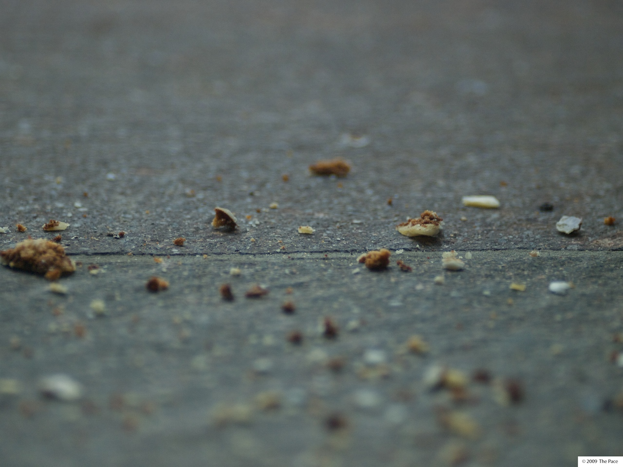 week 46 - Crumbs - zuiko 180/2