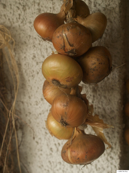 Week 46 - Onions - also with ND vario polarising filter