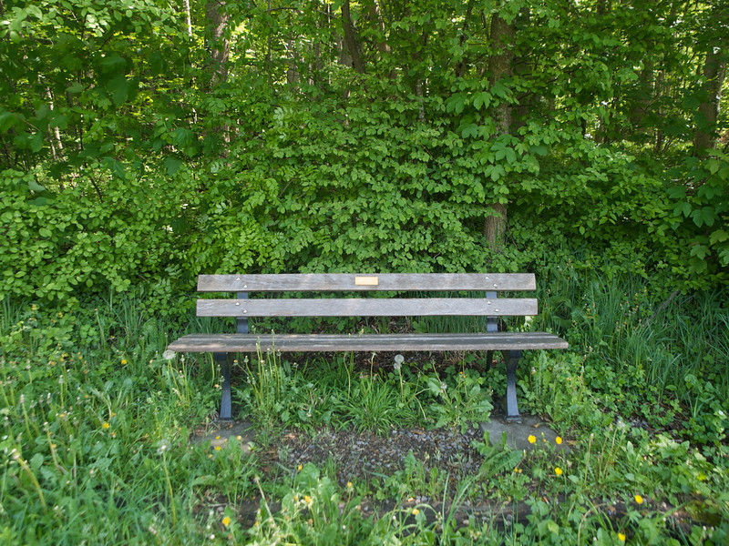 Week 18 - Unusually for switzerland this bench looks rather unkempt