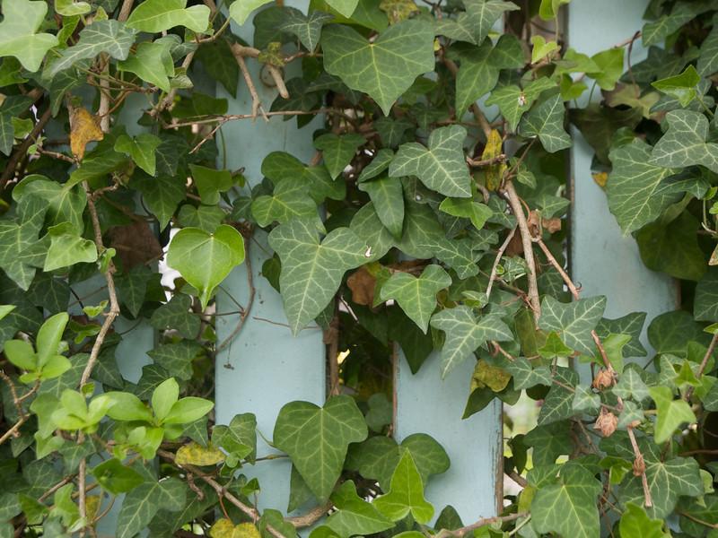 Week 19 - I like the colour of the fence
