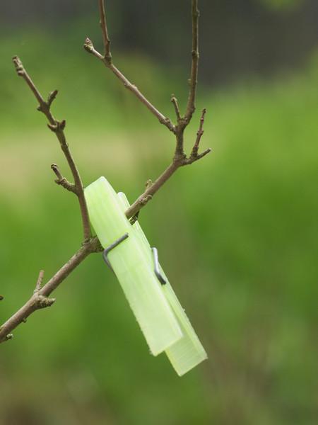 Week 19 - an unusual leaf