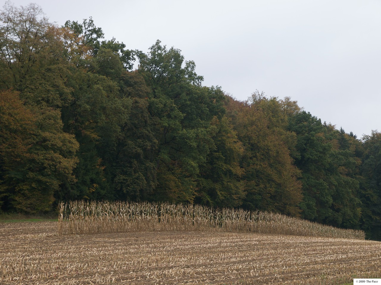 Week 43 - Mohican - I have no idea why the farmer left this single row of corn standing.