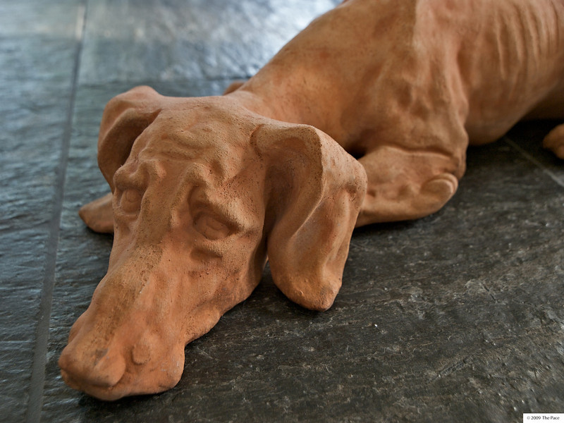 Week 32 - Dog Tired