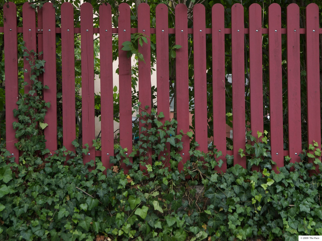week 26 - I liked the colour of this fence