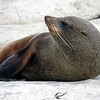 Seal, Kaikoura Peninsula