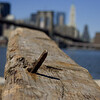 Brooklyn Bridge in the background