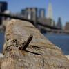 Brooklyn Bridge in the background
