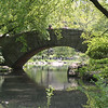 One of Central Parks Bridges