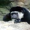 Monkey sleeping at the zoo