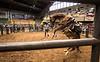 the horse whisperer-1