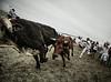 Great Bull Run Texas-200