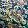 river trout in fresh underwater