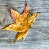 Autumn Leaf over wood background.